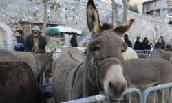 Fête de l'âne à Allauch